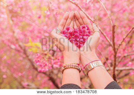 Cherry blossom heart shape in girl's hand at Sakura Garden.