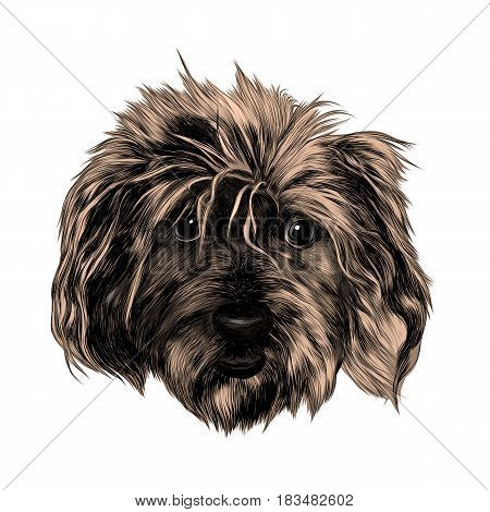 head shaggy dog funny sketch vector graphics color picture