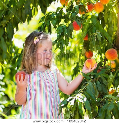Child Picking And Eating Peach From Fruit Tree