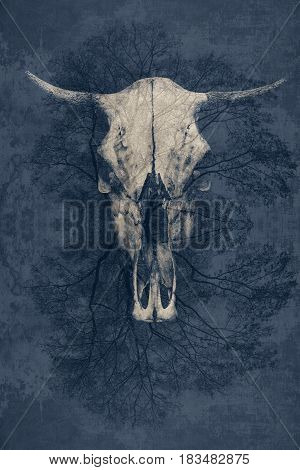 fantastic background, a bull's skull with horns on abstract background.