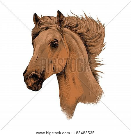 head red brown horse profile sketch vector chart color picture