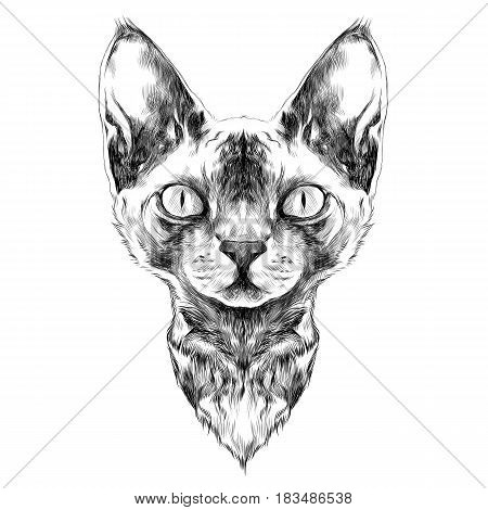 cat breed Sphynx face sketch vector black and white drawing