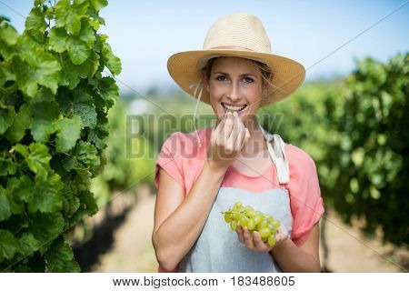 Portrait of female farmer eating grapes at vineyard