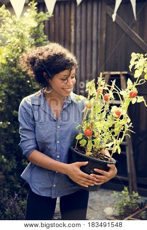 Adult Woman Holding Tomatoes Tree in a Pot