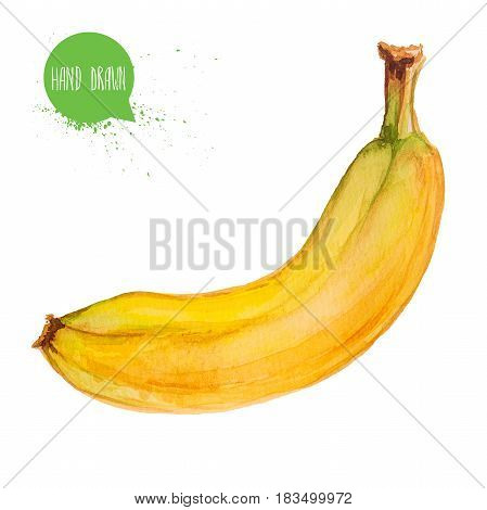 Hand drawn and painted watercolor ripe banana. Isolated on white background fruit illustration.