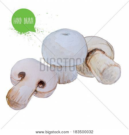 Hand drawn and painted watercolor mushrooms. Champignons isolated on white background. Vegetable illustration.