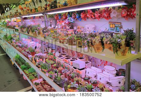 TAIPEI TAIWAN - DECEMBER 3, 2016: Flower and cactus display at Jianguo weekend Flower Market. Jianguo Flower Market is a major flower market where locals can buy fresh flowers bushes and house plants.