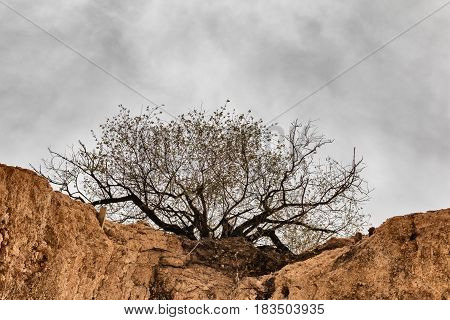 Tree on the rock with grey sky background