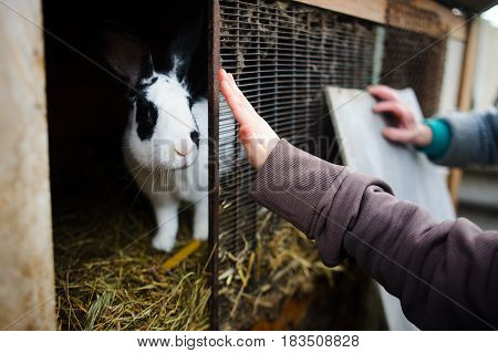 Big spotty rabbit in a cage. Someone's hands touch a cage. Rural life. Subsidiary farm.