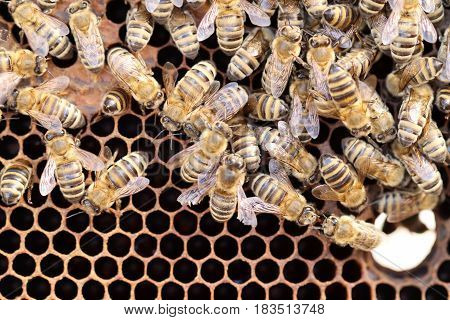 many honey bees are working in a beehive