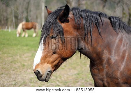 brown cart horse on a field outdoors