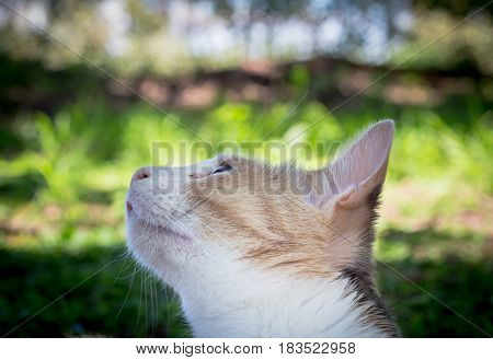 Close up of beautiful calico cat looking up at a bird in tree outdoors