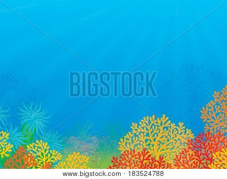 Colorful illustration of a sea bottom with corals and water plants