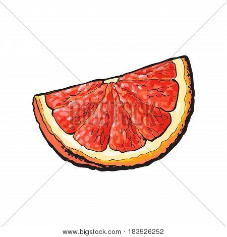 Quarter, segment, piece of ripe pink grapefruit, red orange, hand drawn sketch style vector illustration on white background. Hand drawing of unpeeled grapefruit qurter, piece