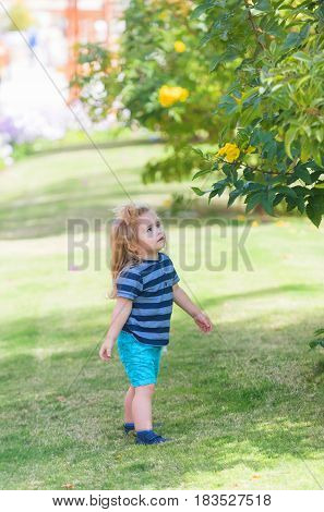 Cute Baby Boy Picking Yellow Blossoming Flowers From Bushes