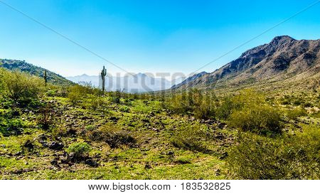 Desert Landscape with Saguaro Cacti and surrounding mountains in South Mountain Park in Maricopa County near the city of Phoenix, Arizona, USA