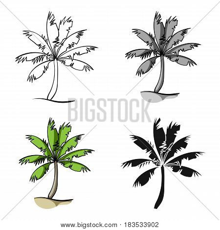 Palm tree icon in cartoon design isolated on white background. Surfing symbol stock vector illustration.