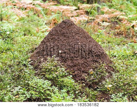 large anthill among the grass in the forest