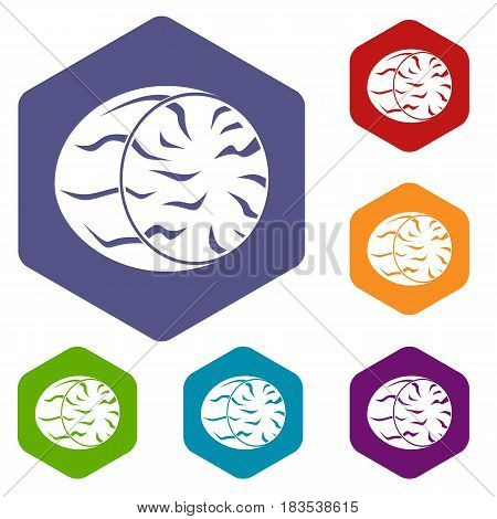 Half of nutmeg icons set hexagon isolated vector illustration