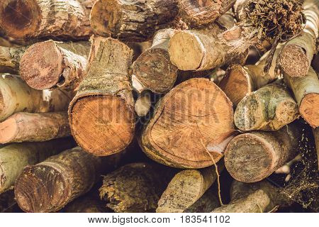 Closeup Of Logs Of Trees In Nature, Pile Of Wood Logs Ready For Winter In The Forest, Firewood As A