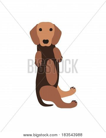 Vector Illustration - Dachshund Dog Puppy