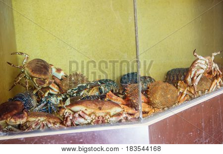 Crab With Lobster In Fishpond At Fish Market