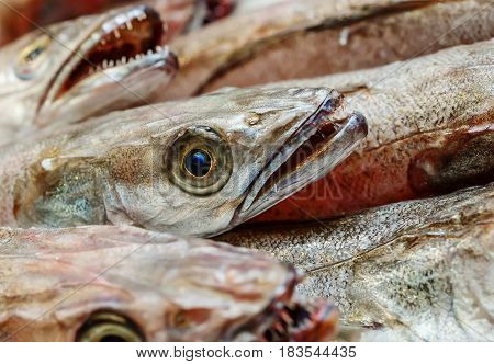 Closeup On Head Of Hake In Showcase Of Seafood Market