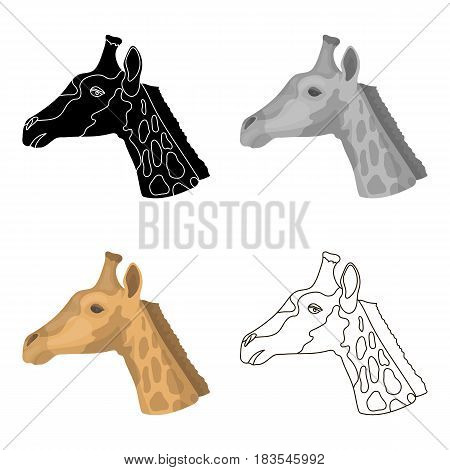 Giraffe icon in cartoon design isolated on white background. Realistic animals symbol stock vector illustration.