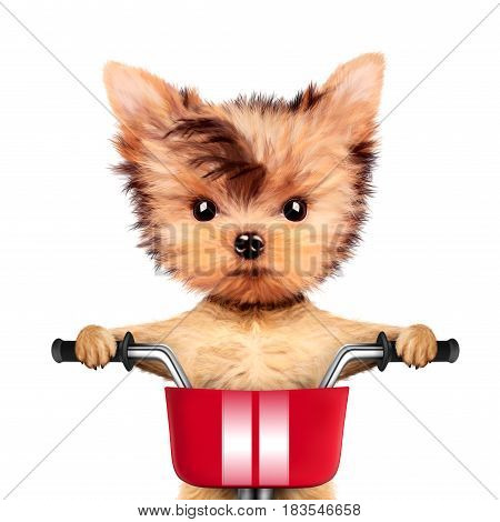 Funny adorable puppy sitting on a bicycle with red basket, isolated on white. Delivery concept. Realistic 3D illustration of yorkshire terrier with clipping path