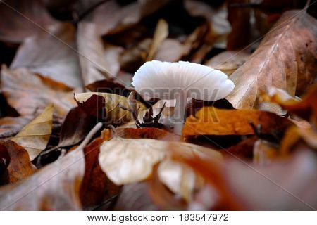 Non-edible mushroom in a forest