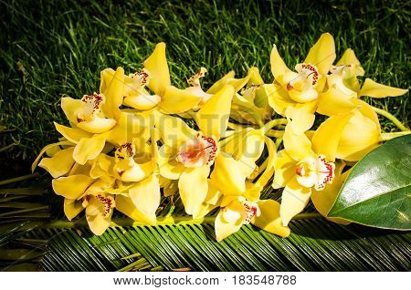 bouquet of yellow orchid flowers on a bed of green leaves