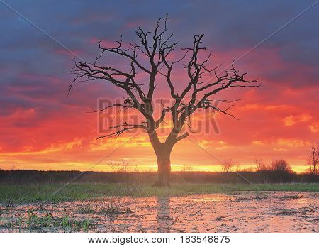 Landscape of a lonely old tree in a meadow against a background of bright sunrise. Colorful colors, tranquility, wild untouched nature. Natural habitat. Red-hot sky.