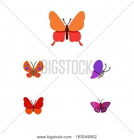 Flat Monarch Set Of Archippus, Monarch, Moth And Other Vector Objects. Also Includes Milkweed, Archippus, Moth Elements.