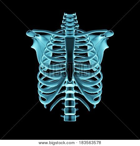A Negative radiograph of a human chest