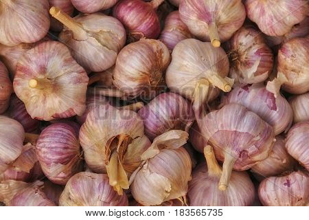 Harvest of garlic. Vegetable farming. Agriculture and horticulture. Garlic as background texture