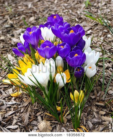 Colorful flowers signal the begining of spring time