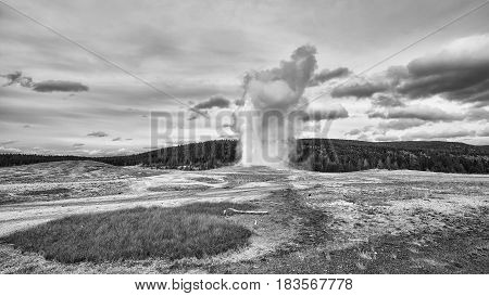 Black And White Picture Of Geyser Eruption In Yellowstone National Park.