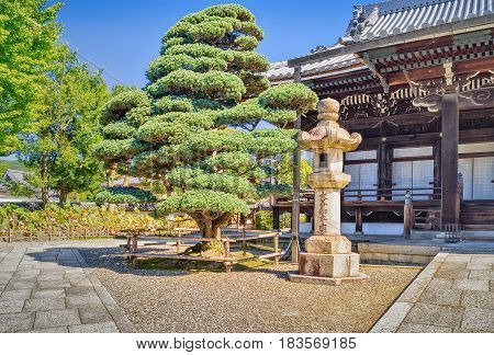 Bonsai Tree And Traditional Japanese Building In Otani Hombyo Temple