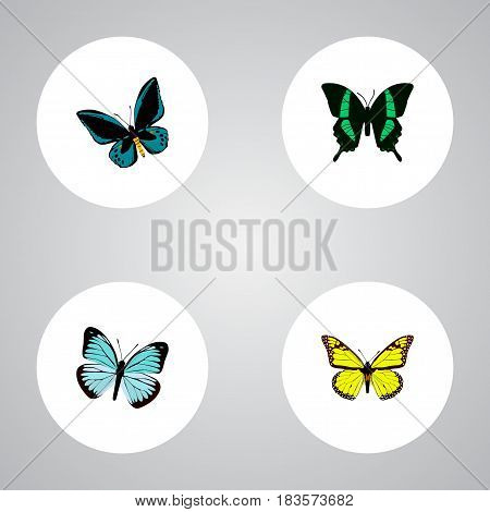 Realistic Lexias, Beauty Fly, Archippus And Other Vector Elements. Set Of Beautiful Realistic Symbols Also Includes Blue, Fly, Butterfly Objects.