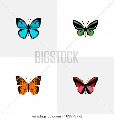 Realistic Danaus Plexippus, Tropical Moth, Sky Animal And Other Vector Elements. Set Of Beauty Realistic Symbols Also Includes Green, Red, Fly Objects.
