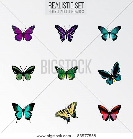 Realistic Demophoon, Checkerspot, Purple Monarch And Other Vector Elements. Set Of Beauty Realistic Symbols Also Includes Sky, Violet, Tiger Objects.