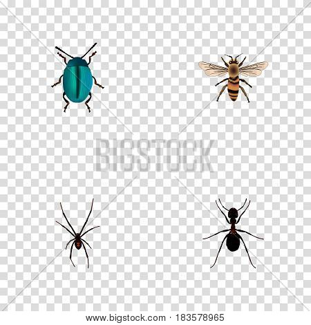 Realistic Wisp, Spinner, Bug And Other Vector Elements. Set Of Hexapod Realistic Symbols Also Includes Bug, Pismire, Wisp Objects.