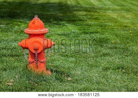 Bright Orange Fire Hydrant In Grassy Field