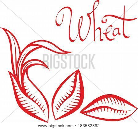 Sprouted wheat or rye grains vector illustration logo template design element.