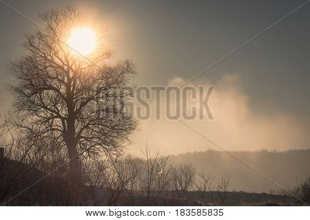 The sun drives the fog from the frozen field beautifully outlining the silhouette of the tree the early frosty spring morning