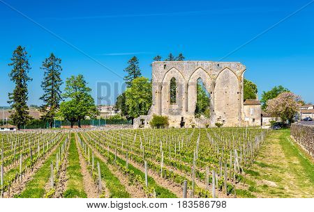 Vineyards and ruins of an ancient convent in Saint Emilion - France, Aquitaine
