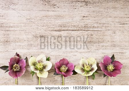 Vintage frame background with spring flowers in pastel color.Top view text space