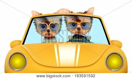 Couple of puppies sitting in the yellow cabriolet, isolated on white background. Vacation and travel concept concept. Clipping path.
