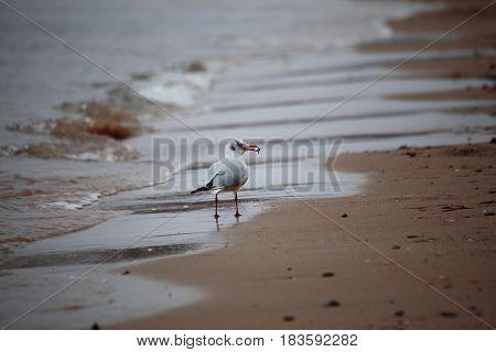 bird tern sea nature outdoor animal on sea coast