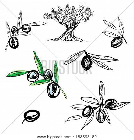 hand drawn set of ink olive branch, leaves.